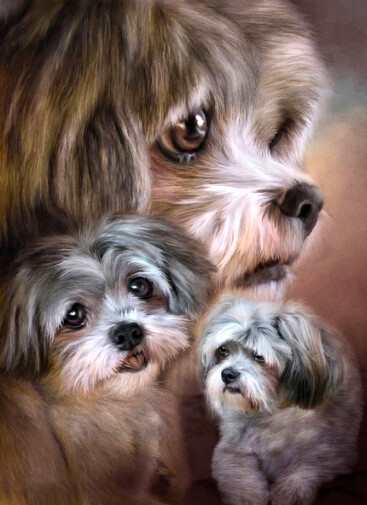 Precious Puppies  - Full Drill Diamond Painting - Specially ordered for you. Delivery is approximately 4 - 6 weeks.