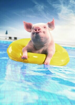 Pig In A Pool - Full Drill Diamond Painting - Specially ordered for you. Delivery is approximately 4 - 6 weeks.