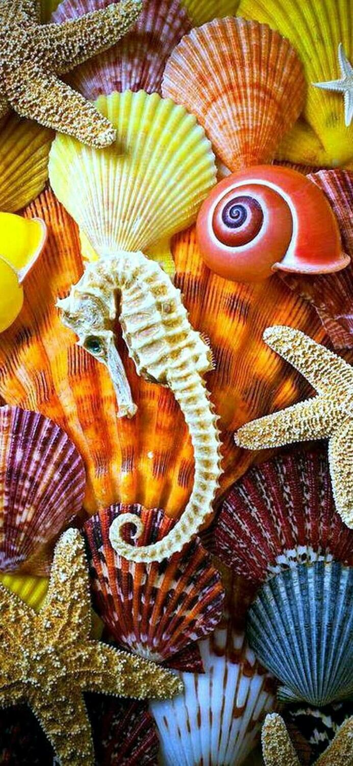 Sea And Beach Life - Full Drill Diamond Painting - Specially ordered for you. Delivery is approximately 4 - 6 weeks.