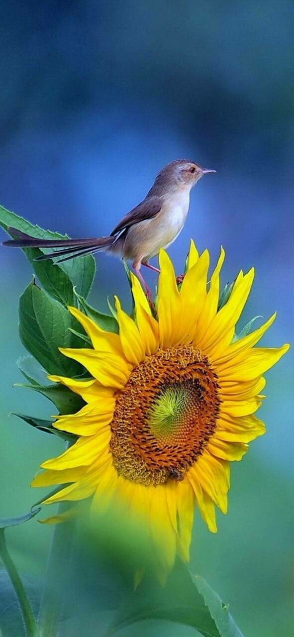 Sparrow on Sunflower - Full Drill Diamond Painting - Specially ordered for you. Delivery is approximately 4 - 6 weeks.