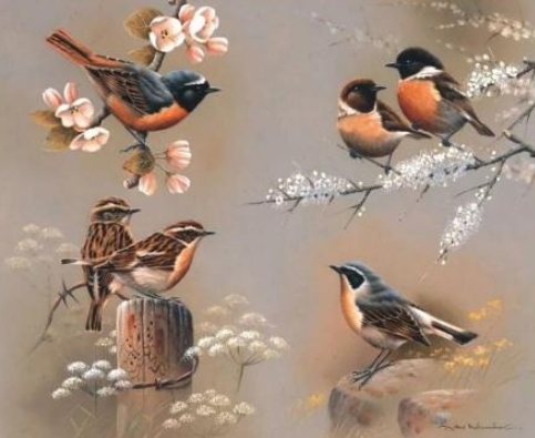 Birds 08 - Full Drill Diamond Painting - Specially ordered for you. Delivery is approximately 4 - 6 weeks.
