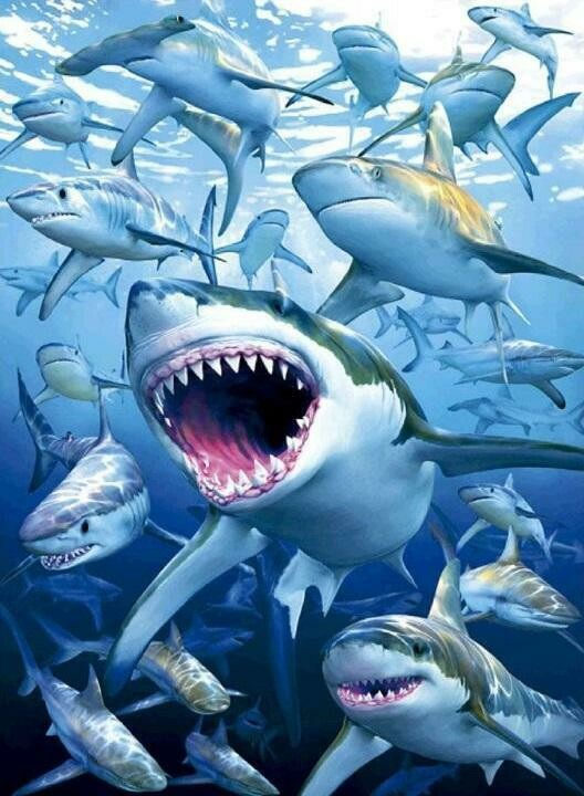 Sharks - Full Drill Diamond Painting - Specially ordered for you. Delivery is approximately 4 - 6 weeks.