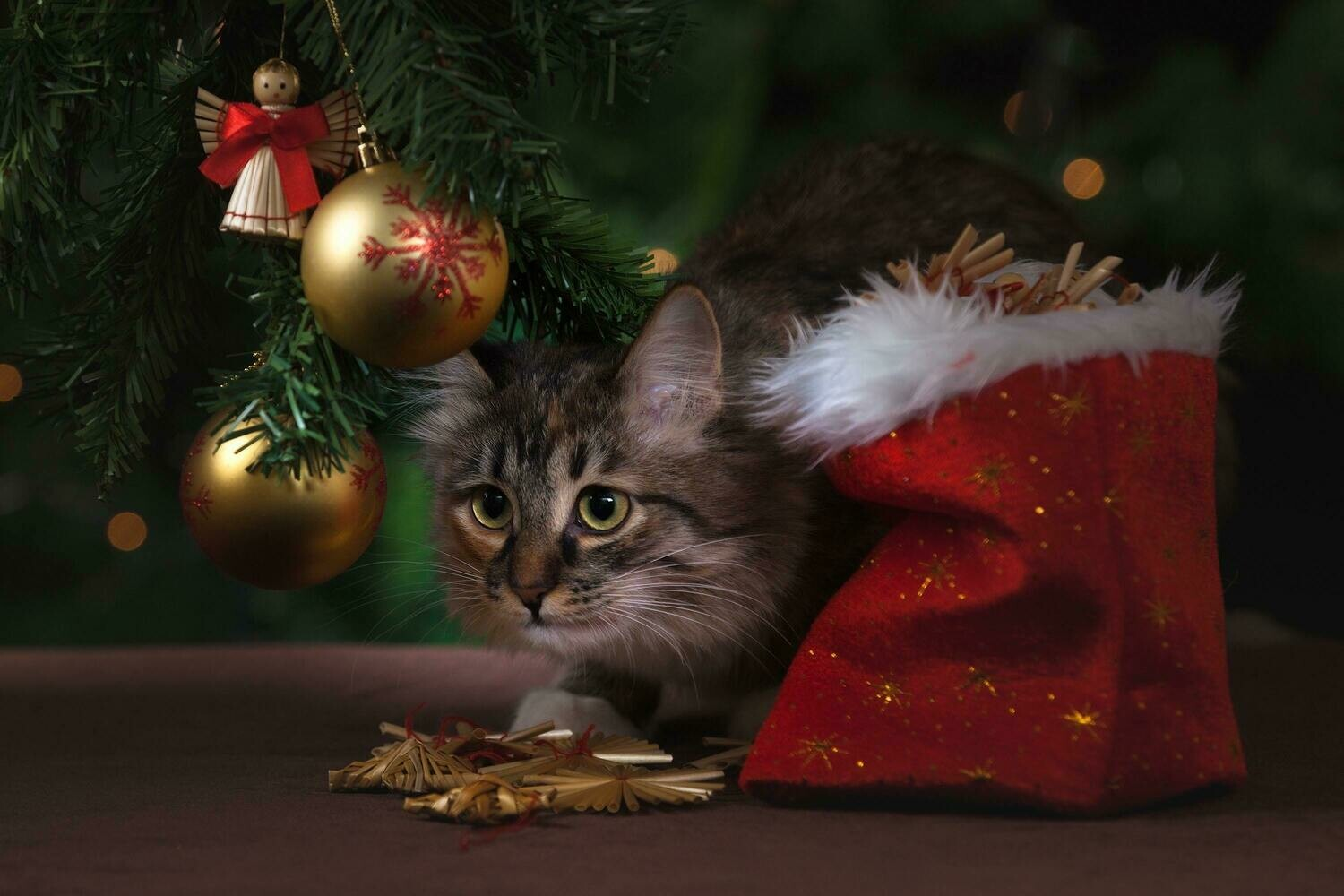 Adorable Christmas Cat - Full Drill Diamond Painting - Specially ordered for you. Delivery is approximately 4 - 6 weeks.