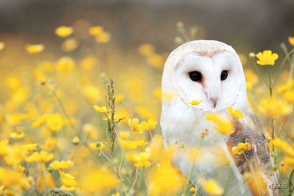 White Owl Yellow Flowers - Full Drill Diamond Painting - Specially ordered for you. Delivery is approximately 4 - 6 weeks.