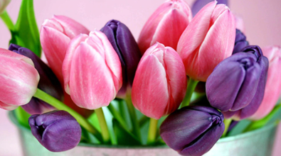 Tulips 02 - Full Drill Diamond Painting - Specially ordered for you. Delivery is approximately 4 - 6 weeks.