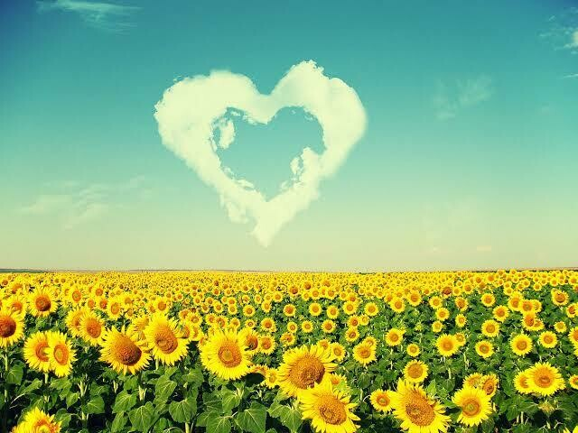 Sunflowers 03 - Full Drill Diamond Painting - Specially ordered for you. Delivery is approximately 4 - 6 weeks.