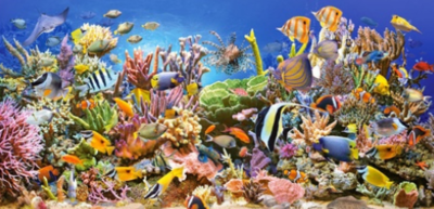 Under the Sea 03 - Full Drill Diamond Painting - Specially ordered for you. Delivery is approximately 4 - 6 weeks.