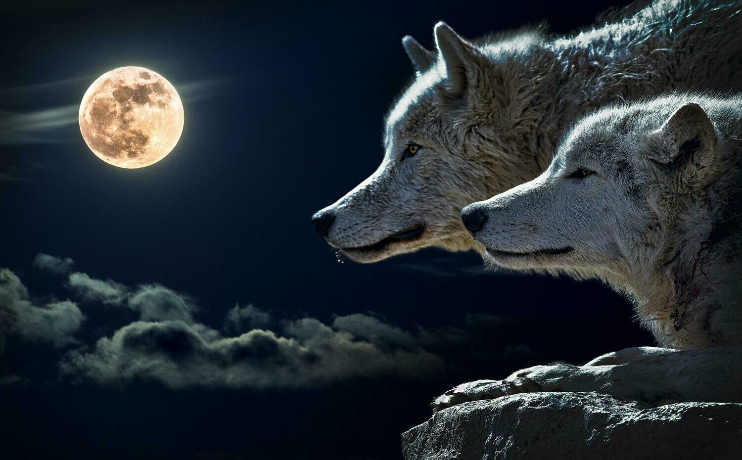 Two Wolves and the Moon - Full Drill Diamond Painting - Specially ordered for you. Delivery is approximately 4 - 6 weeks.
