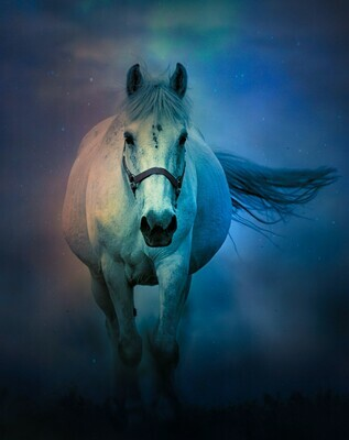 White Horse Alone - Full Drill Diamond Painting - Specially ordered for you. Delivery is approximately 4 - 6 weeks.