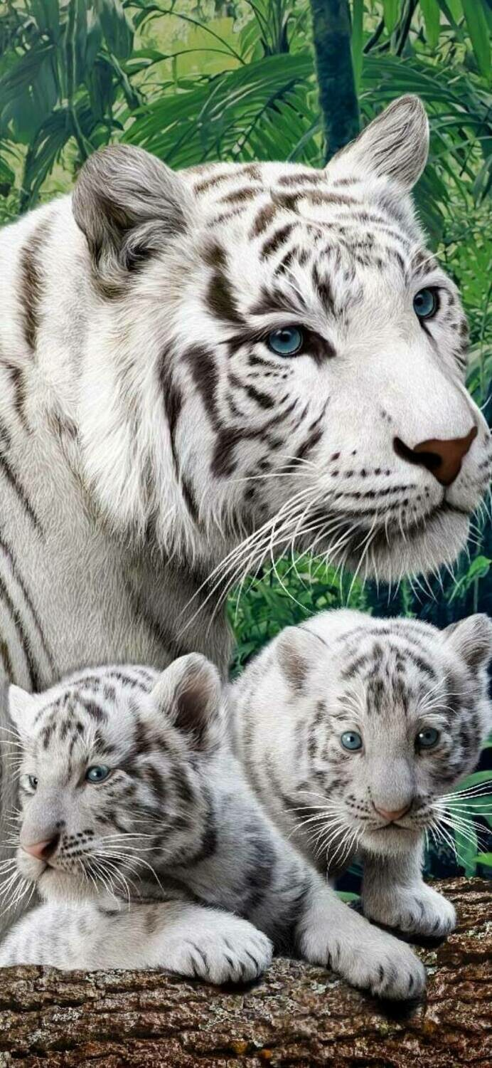 White Tiger 03 - Full Drill Diamond Painting - Specially ordered for you. Delivery is approximately 4 - 6 weeks.