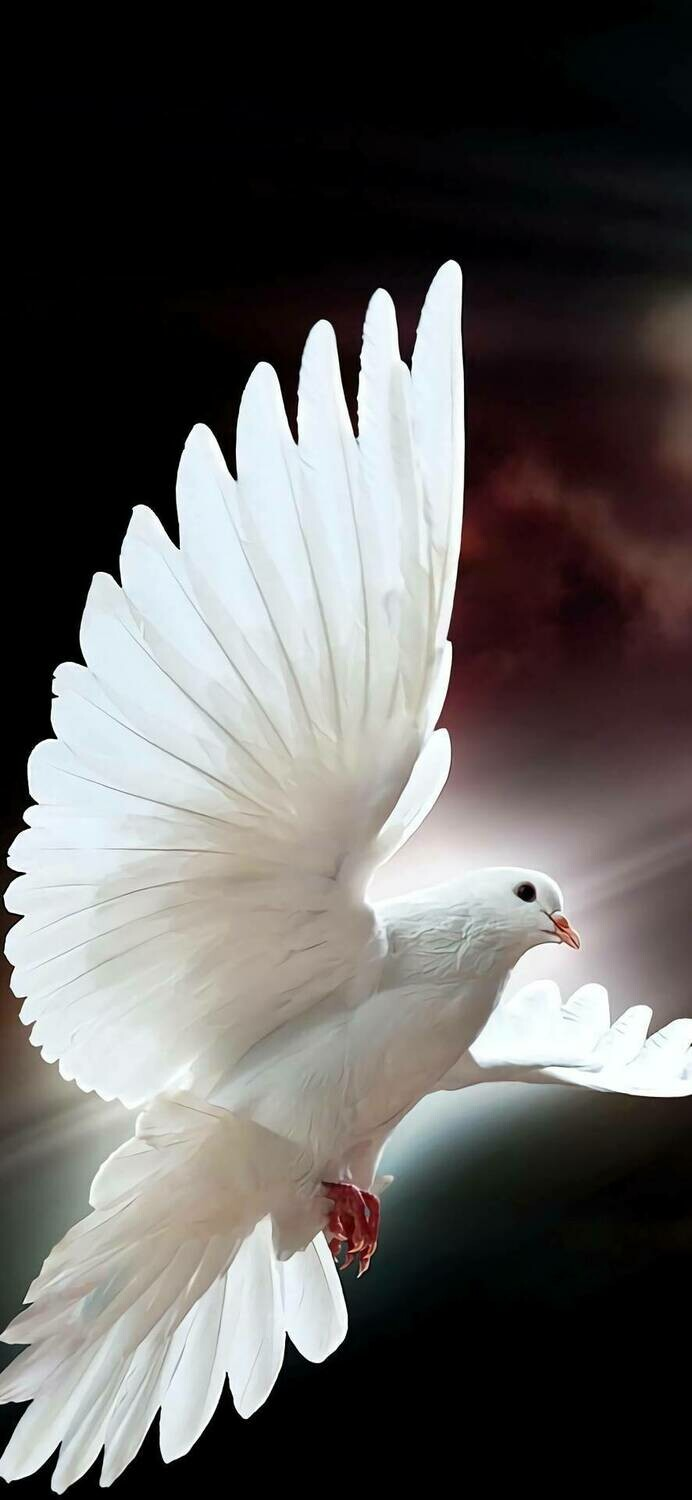 White Bird - Full Drill Diamond Painting - Specially ordered for you. Delivery is approximately 4 - 6 weeks.