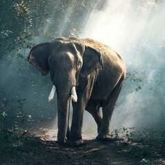 Elephant In Pixio - Full Drill Diamond Painting - Specially ordered for you. Delivery is approximately 4 - 6 weeks.