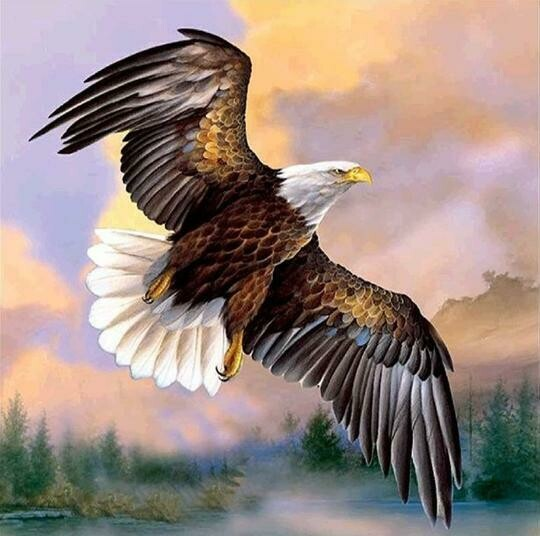 Eagle 2 - Full Drill Diamond Painting - Specially ordered for you. Delivery is approximately 4 - 6 weeks.