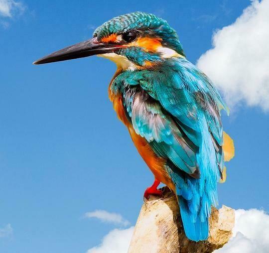 Kingfisher- Full Drill Diamond Painting - Specially ordered for you. Delivery is approximately 4 - 6 weeks.