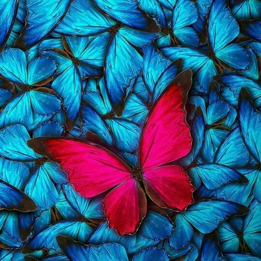 Red Butterfly - Full Drill Diamond Painting - Specially ordered for you. Delivery is approximately 4 - 6 weeks.