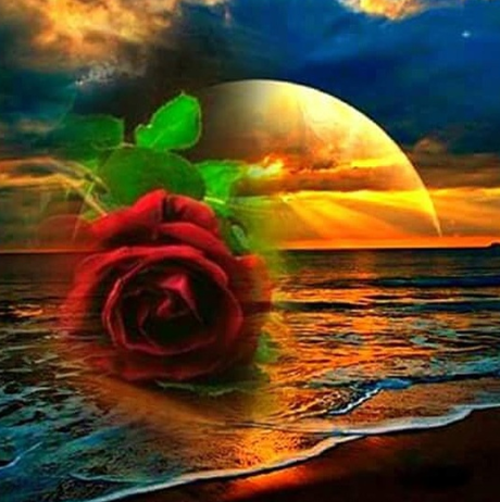 Rose And Moon - Full Drill Diamond Painting - Specially ordered for you. Delivery is approximately 4 - 6 weeks.