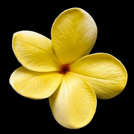 Yellow Frangipani - Full Drill Diamond Painting - Specially ordered for you. Delivery is approximately 4 - 6 weeks.