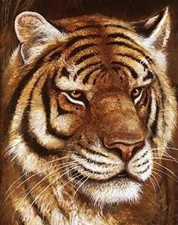 Tiger Face - 30 x 40cm Full Drill (Round) Diamond Painting Kit - Currently in stock