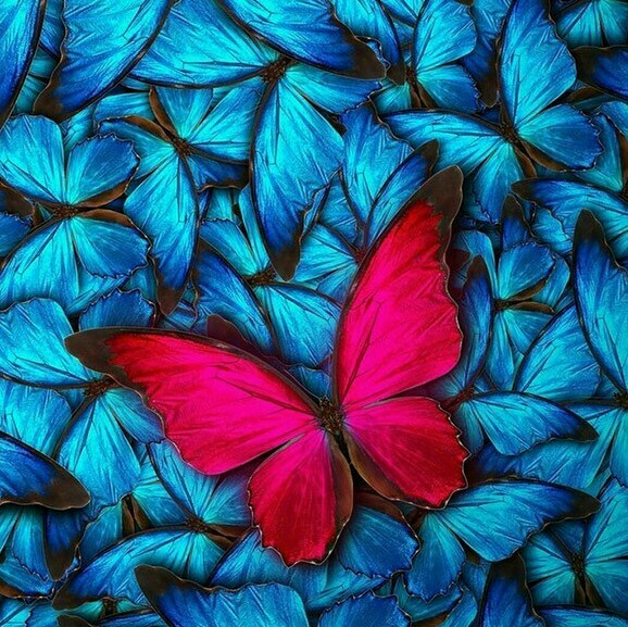Red Butterfly - 30 x 30cm Full Drill (Square) Diamond Painting Kit - Currently in stock