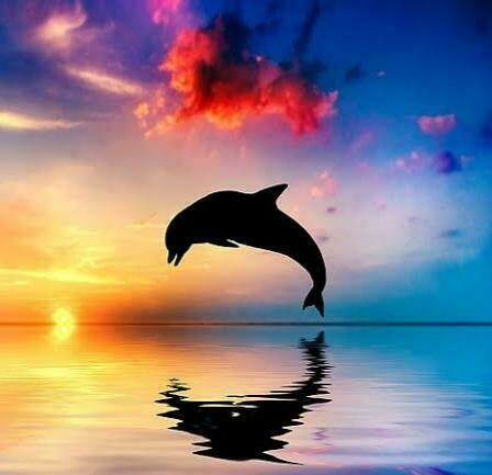 Beautiful Dolphin - 50 x 50cm Full Drill (Square), Diamond Painting Kit - Currently in stock