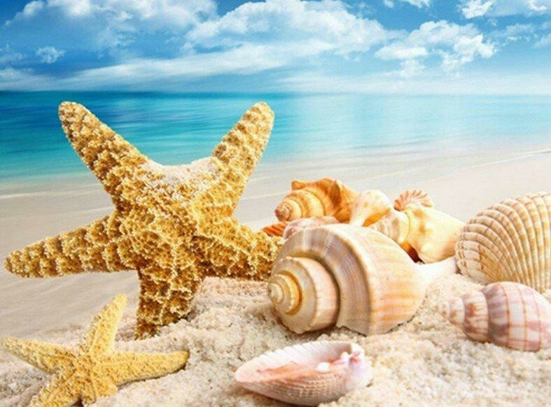 Shells On A Beach - 40 x 50cm Full Drill (Square), Diamond Painting Kit - Currently in stock