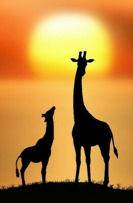 2 Giraffes At Sunset- 60 x 90cm- Full Drill (square) Diamond Painting Kit - Currently in stock