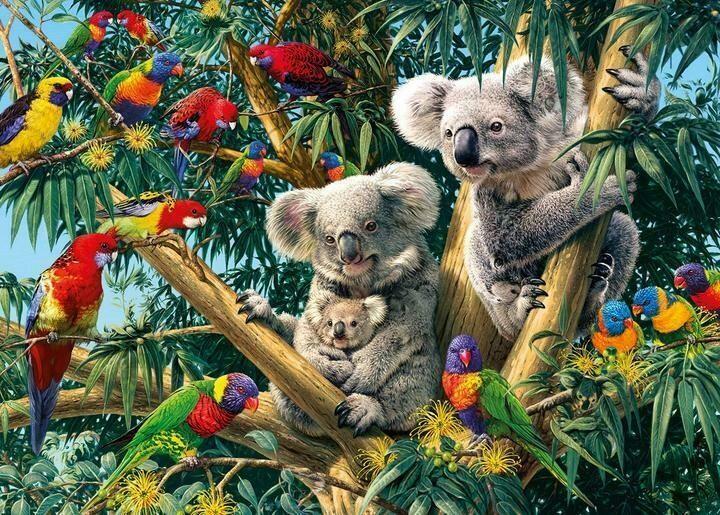 Australian Koalas- 60 x 90cm- Full Drill (round) Diamond Painting Kit - Currently in stock