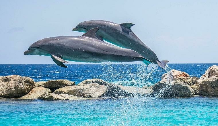 Dolphins- 60 x 90cm- Full Drill (square) Diamond Painting Kit - Currently in stock
