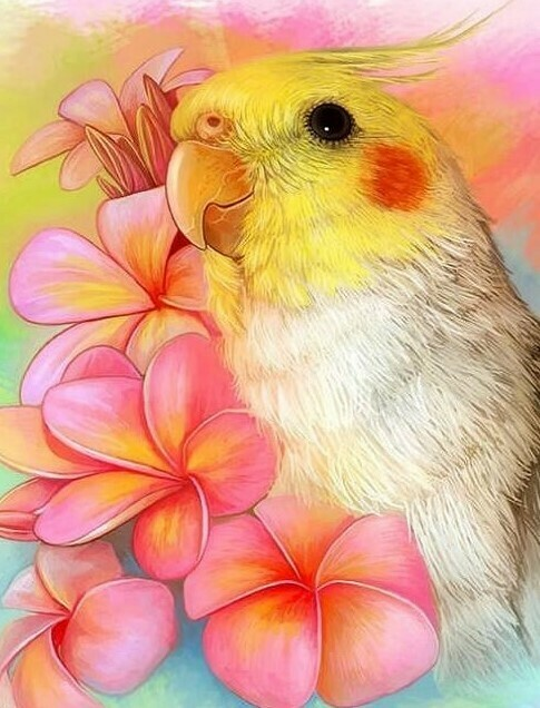 Cockatiel - 30 x 40cm Full Drill (Square) Diamond Painting Kit - Currently in stock