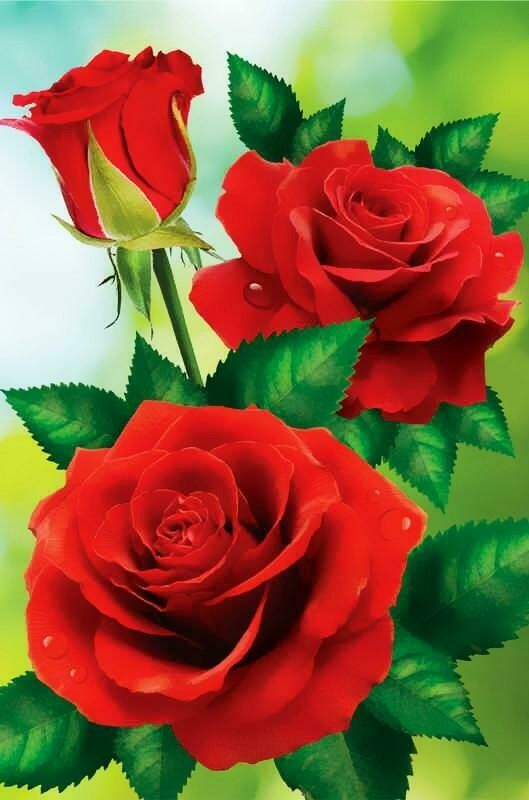 Red Roses - 30 x 40cm Full Drill (Round) Diamond Painting Kit - Currently in stock