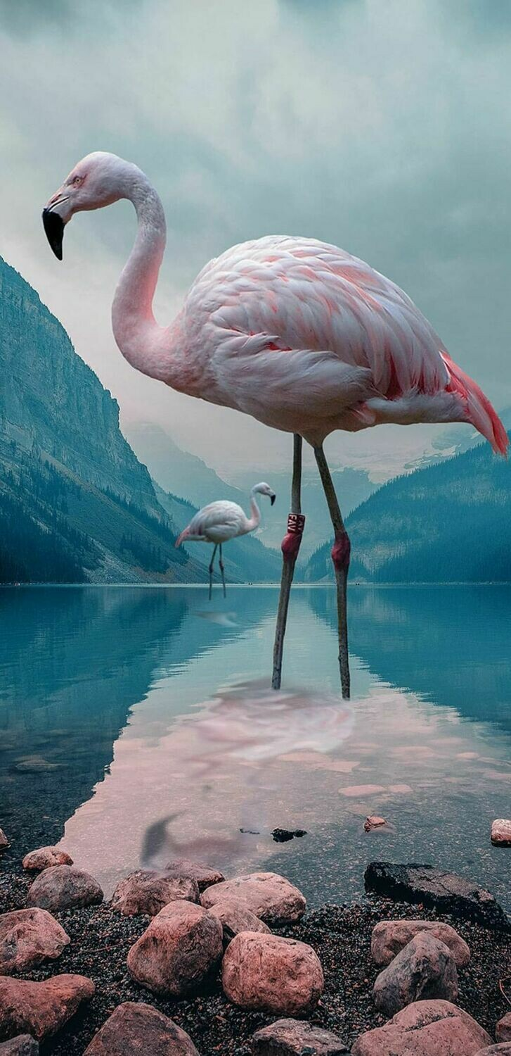Flamingos In Water- Full Drill Diamond Painting - Specially ordered for you. Delivery is approximately 4 - 6 weeks.