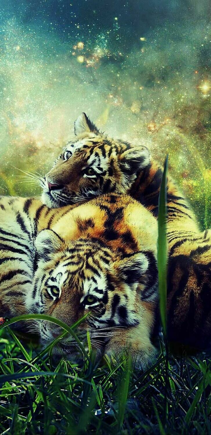 Tigers In The Grass - Full Drill Diamond Painting - Specially ordered for you. Delivery is approximately 4 - 6 weeks.