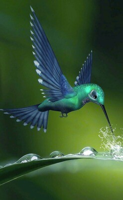 Hummingbird Water- Full Drill Diamond Painting - Specially ordered for you. Delivery is approximately 4 - 6 weeks.