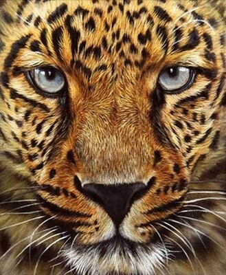 Cheetah - 30 x 40cm Full Drill (Round) Diamond Painting Kit - Currently in stock