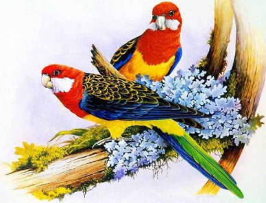 Birds 14 - 50 x 70cm - Full Drill (Square), Diamond Painting Kit - Currently in stock