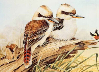 Birds 11 - 50 x 70cm - Full Drill (Square), Diamond Painting Kit - Currently in stock