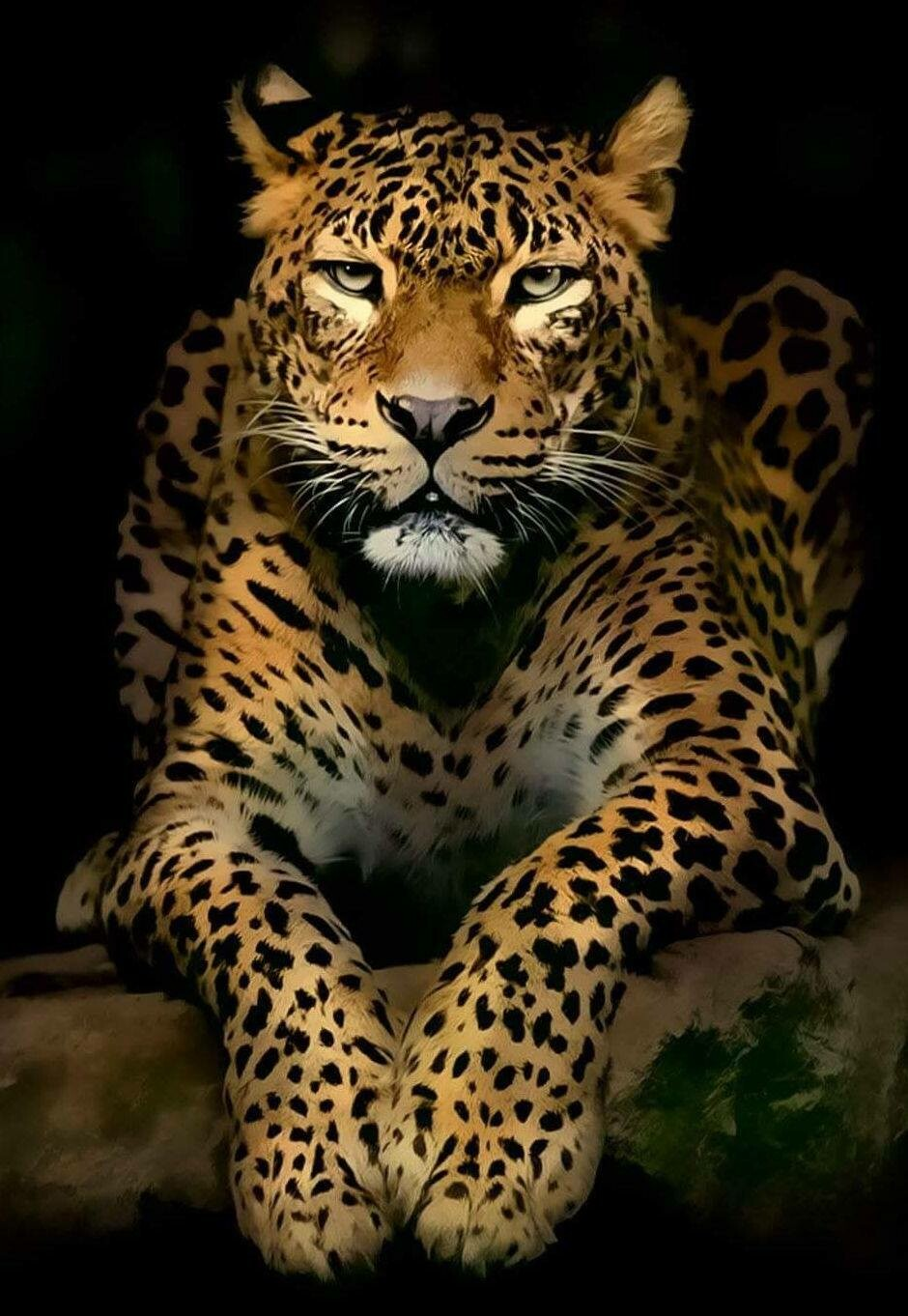 Leopard on Black - 50 x 70cm - Full Drill (Square), Diamond Painting Kit - Currently in stock