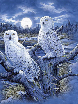 2 White Owls - 40 x 50cm Full Drill (Square), Diamond Painting Kit - Currently in stock