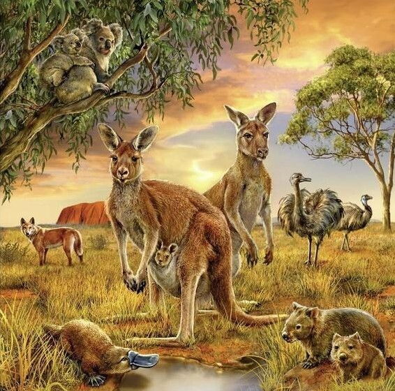 Aussie Wildlife - 50 x 50cm Full Drill (Round), Diamond Painting Kit - Currently in stock