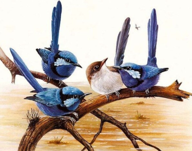 Birds 17 - 40 x 50cm Full Drill (Square), Diamond Painting Kit - Currently in stock