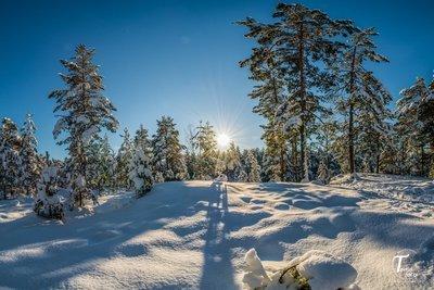 Skogstur under snøteppe