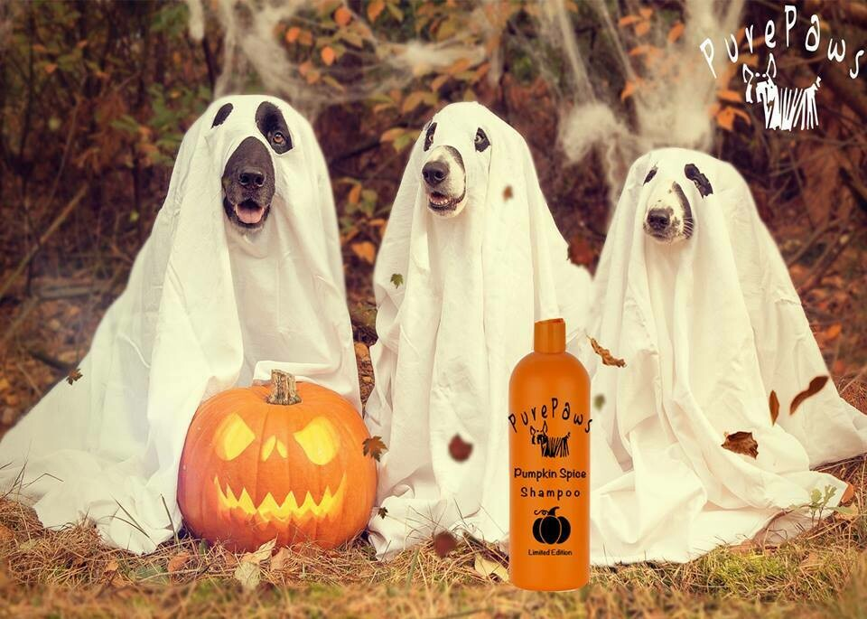 Pure Paws Pumpkin Spice 16oz - LIMITED EDITION