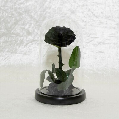 Black Preserved Rose Dome