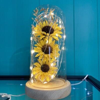 Preserved Sunflower Dome
