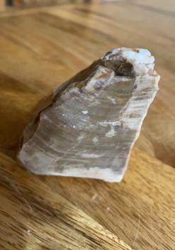 Petrified Wood Raw with polished surface