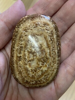 Coffee Aragonite Palmstone