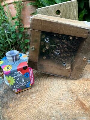 Perspex Fronted Mini Bug House & Wildflower Seeds