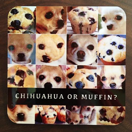 Coaster / Chihuahua Muffin