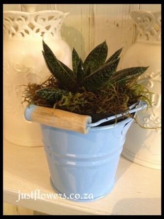 Galvanized with Succulent