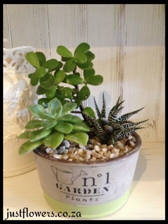 Sml Cacti Planter